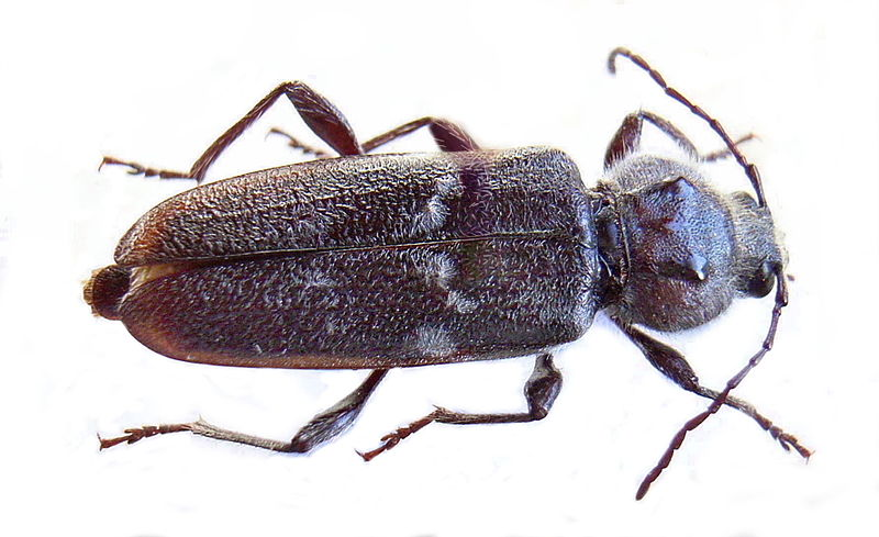 Beetle Certificates in Cape Town